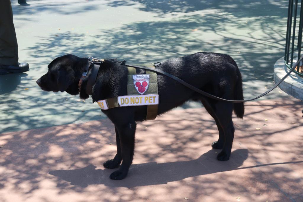 DLR 警察犬がお仕事中
